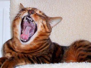 089 30 March Fiki yawn red