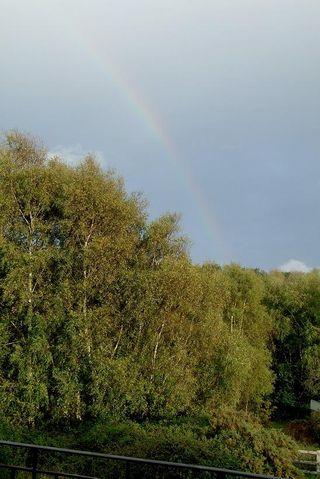 293 22 oct rainbow red