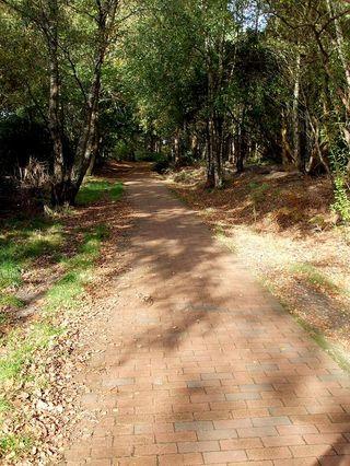 297 26 oct brick path red
