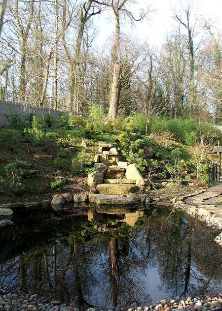 Red tea garden 5
