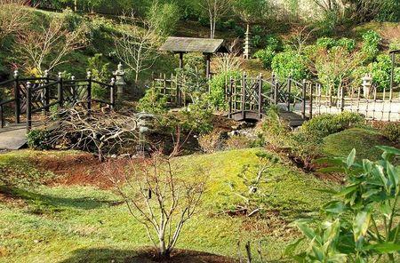Red tea garden 3