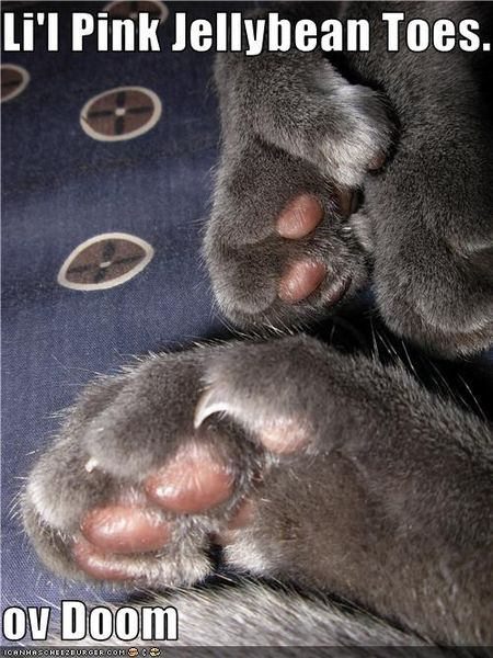 Funny-pictures-cat-has-toes-of-doom