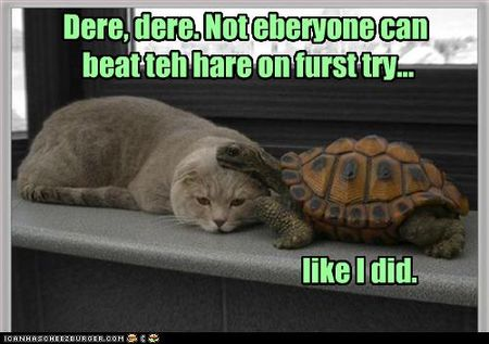 Funny-pictures-cat-did-not-beat-hare