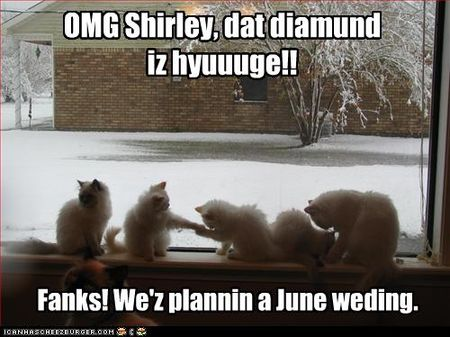 Funny-pictures-cat-is-engaged