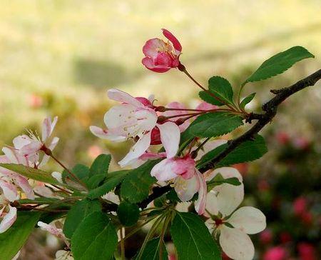 Blossom 3 red