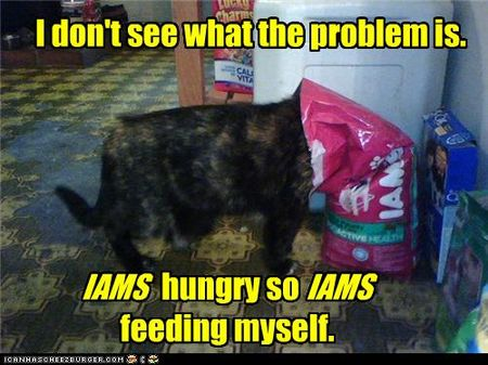 Funny-pictures-cat-feeds-itself