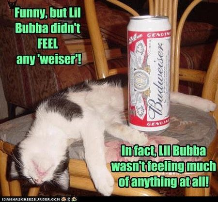 Funny-pictures-cat-is-drunk