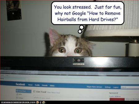 Funny-pictures-cat-gives-google-advice