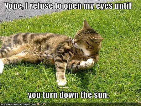 Funny-pictures-cat-refuses-to-open-eyes