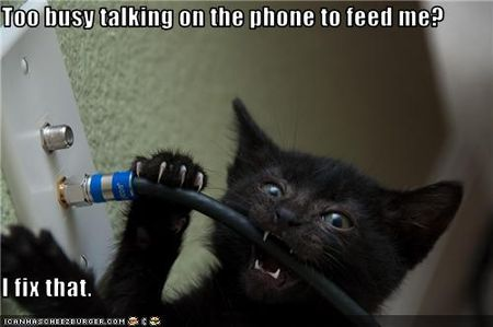 Funny-pictures-cat-fixes-wires