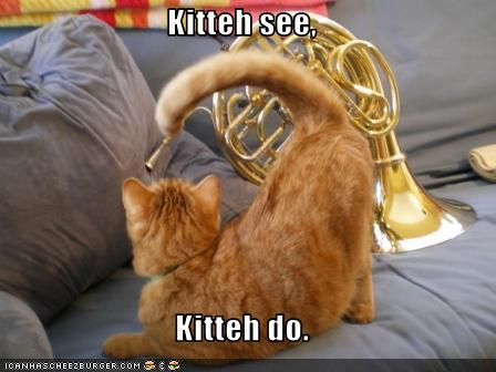Funny-pictures-cat-imitates-musical-instrument
