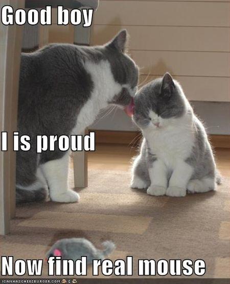 Funny-pictures-proud-parent-cat-kitten