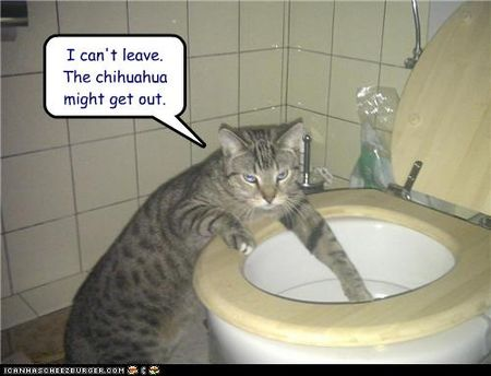 Funny-pictures-cat-is-by-toilet