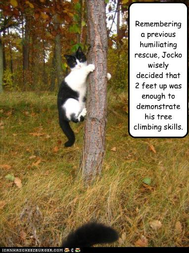 Funny-pictures-cat-climbs-tree