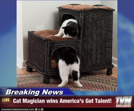 Funny-pictures-cat-is-a-magician