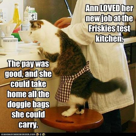 Funny-pictures-cat-is-chef
