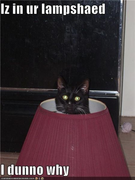 Funny-pictures-cat-is-in-lampshade
