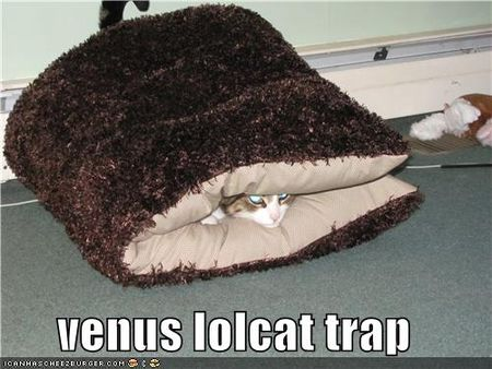 Funny-pictures-cat-is-trapped