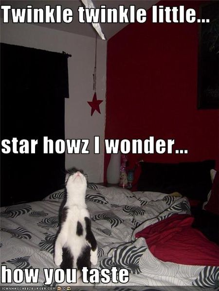 Funny-pictures-cat-looks-at-star