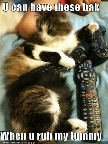 Funny-pictures-cat-hogs-remotes