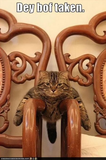 Funny-pictures-cat-takes-both-chairs