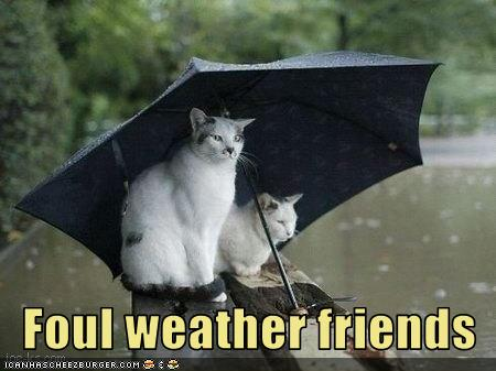 Funny-pictures-cats-in-rain-are-friends