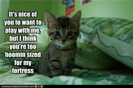 Funny-pictures-kitten-has-fortress