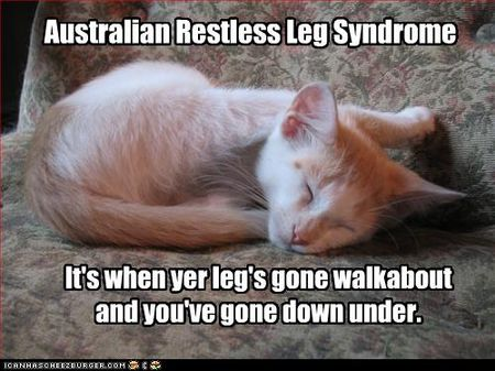 Funny-pictures-kitten-has-syndrome