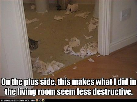 Funny-pictures-cat-destroyed-bathroom