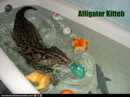 Funny-pictures-cat-is-alligator