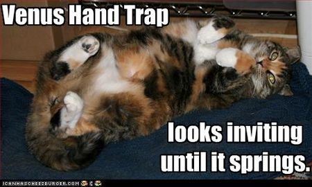 Funny-pictures-cat-is-a-trap