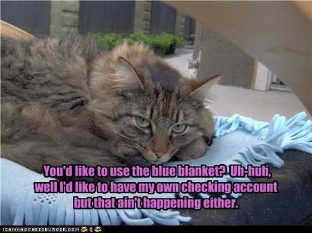 Funny-pictures-cat-is-on-blanket