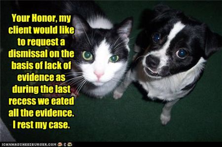 Funny-pictures-cat-is-on-trial