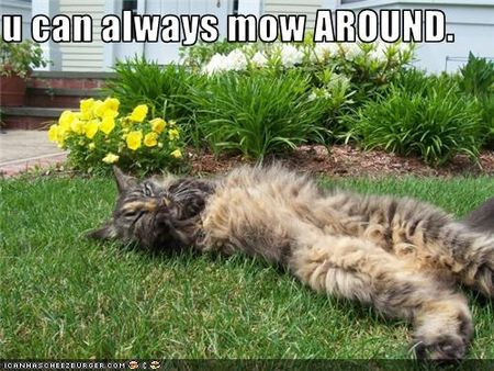 Funny-pictures-cat-naps-on-lawn