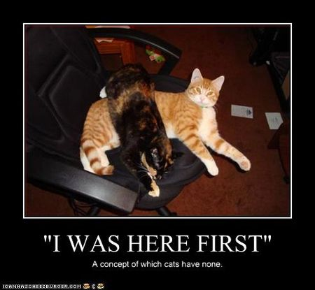 Funny-pictures-cats-are-on-chair