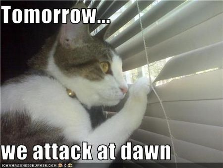 Funny-pictures-cat-will-attack-at-dawn