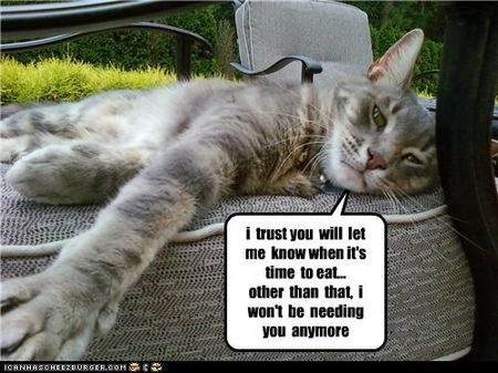 Funny-pictures-cat-relaxes-outside