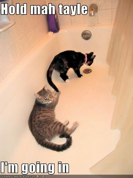 Funny-pictures-cats-are-in-tub