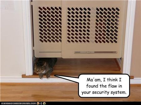 Funny-pictures-cat-found-flaw-in-system