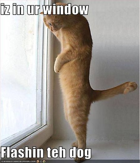 Funny-pictures-cat-is-in-window