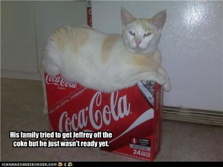 Funny-pictures-cat-is-on-coke