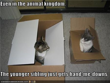 Funny-pictures-cats-are-siblings
