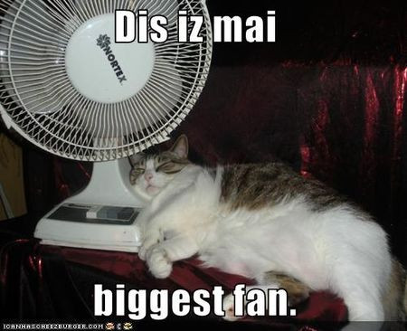 Funny-pictures-cat-has-fan