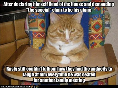 Funny-pictures-cat-has-special-chair