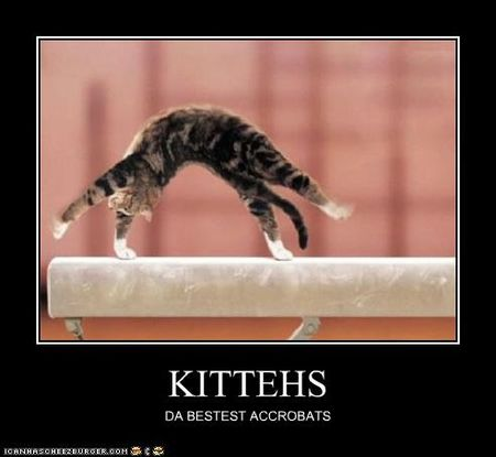 Funny-pictures-cat-is-acrobat