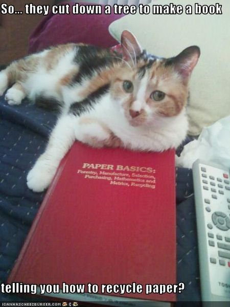 Funny-pictures-cat-makes-fun-of-book