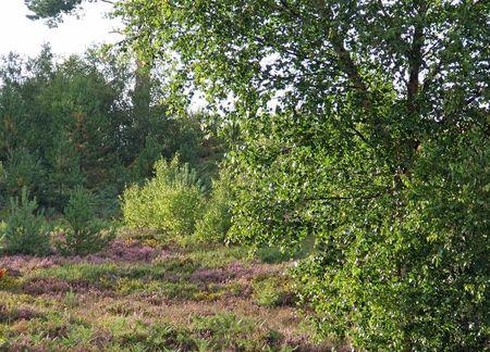 Nature heath