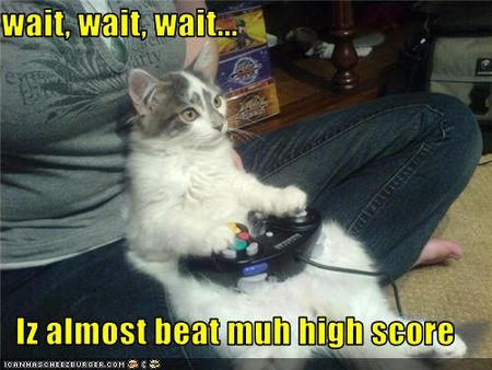 Funny-pictures-cat-plays-video-game