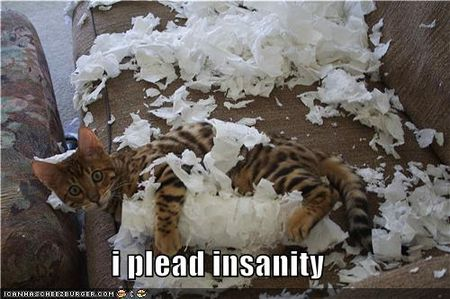 Funny-pictures-cat-pleads-insanity