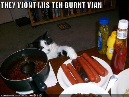 Funny-pictures-cat-steals-hot-dog
